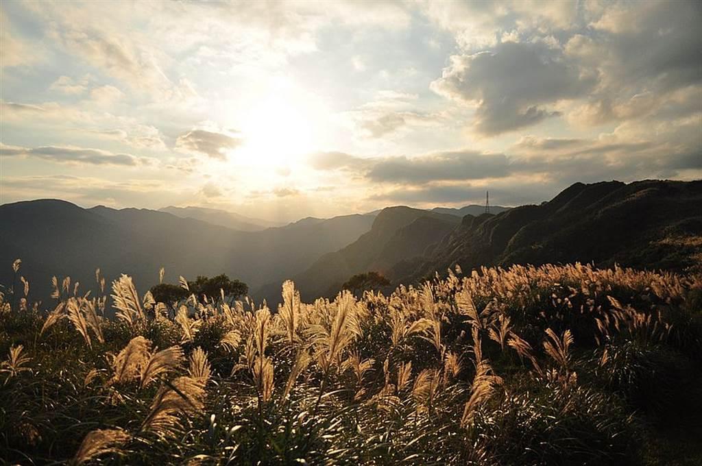 草嶺古道美麗的芒花。(圖取自新北市漁業處官網)