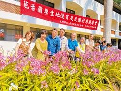 台南復育16年 苞舌蘭開花