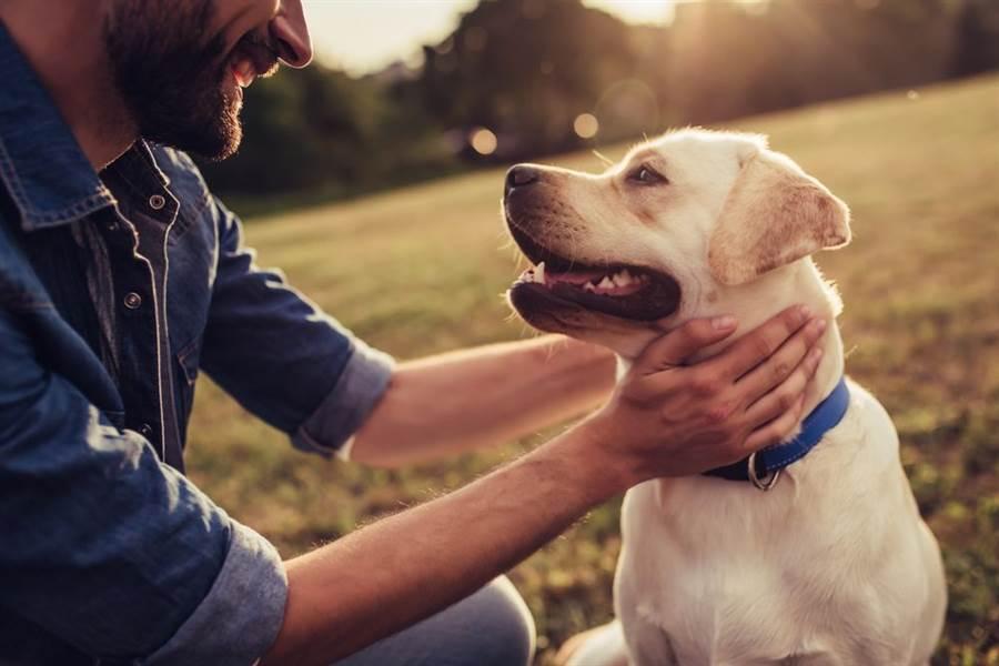 美國華盛頓大學及德州農工大學正式啟動「犬隻衰老計劃」(The Dog Aging Project),徵召1萬隻狗狗參與,不少飼主都搶著報名。(圖/Shutterstock)