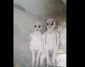 這個大眼生物是外星人嗎?