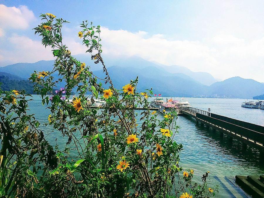 日月潭秋天美景,映照花朵、湖面好浪漫!
