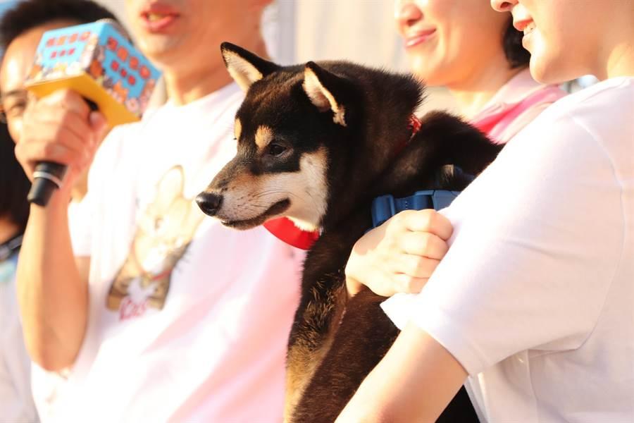 韓國瑜攜帶人氣超高的韓家犬「黑米魯」現身。(吳亮賢攝)