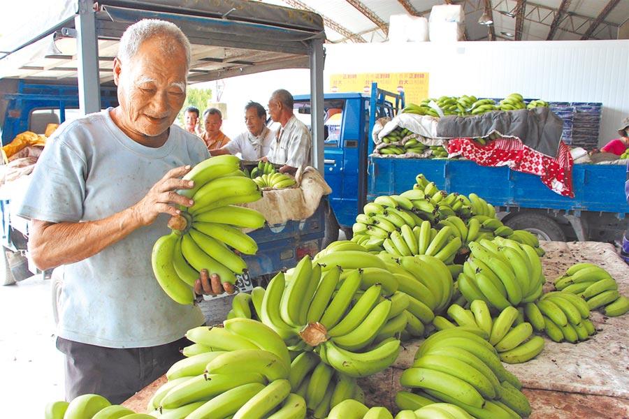 農委會將收購次級品穩定蕉價,但產地價格高於收購監控價不少,受到質疑。(本報資料照片)