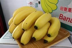 收入減損有保障 香蕉收入保險開賣
