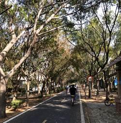 東豐綠廊疑得「樹瘟」恐成禿廊 觀旅局:安排專家現場會勘