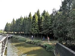 這種樹帶動地方觀光 台南六甲推輕旅行一遊落羽松祕境