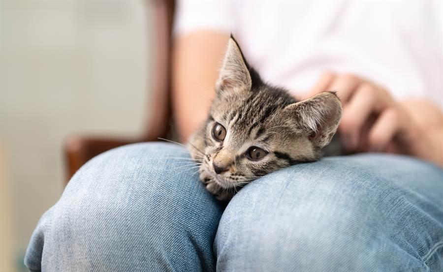 山洞撿流浪貓 養2個月嚇到急野放(示意圖/達志影像)