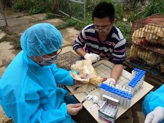 候鳥遷徙必經地 新北提前部署防禽流感
