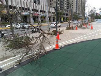 風城不是「吹」的 新竹強風刮倒路樹壓傷孕婦