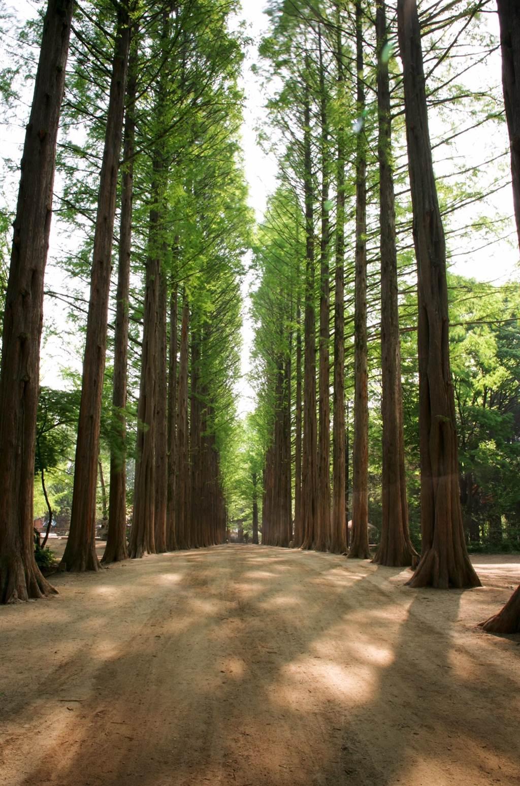 江原道四季皆美,是韓國的度假勝地。圖:業者提供