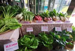 台南農畜聯合開放日 稀有甘藍白蘿蔔展給你看