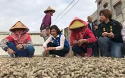 全面護農 雲林縣府建請農委會收購花生每台斤47元