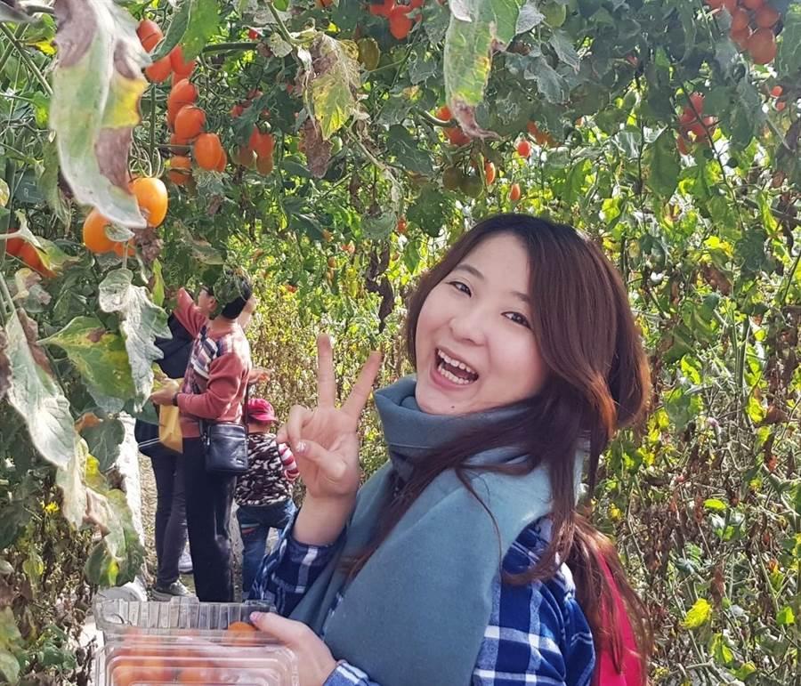 ▲親採冬季限定橙蜜香番茄!