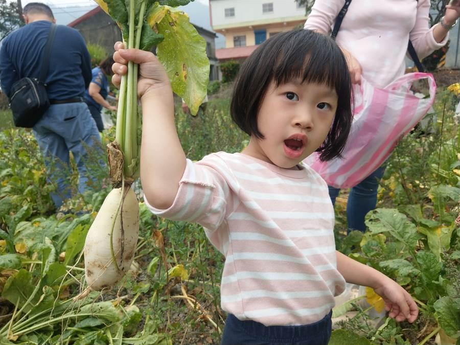 ▲手拔美濃白玉蘿蔔,親子同遊正好玩!