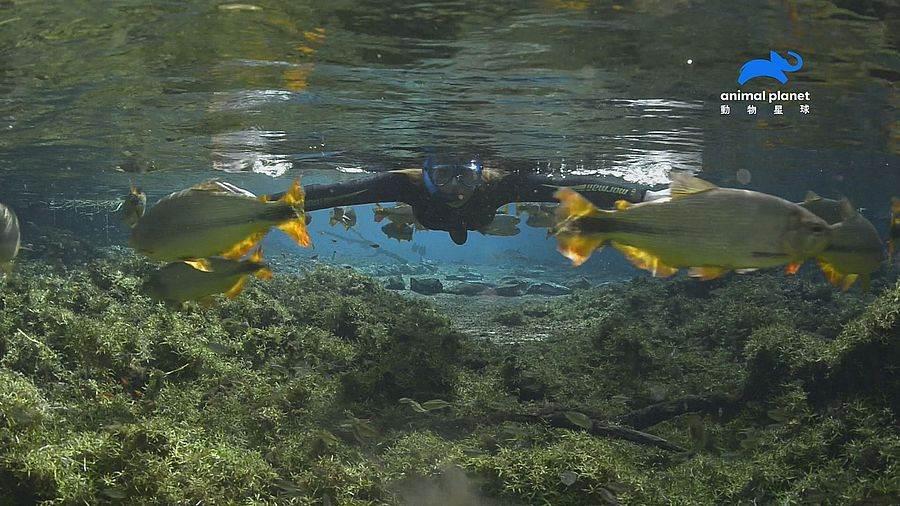 亞特蘭提斯再現?巴西雨林神秘沒入水中。(動物星球頻道 提供)