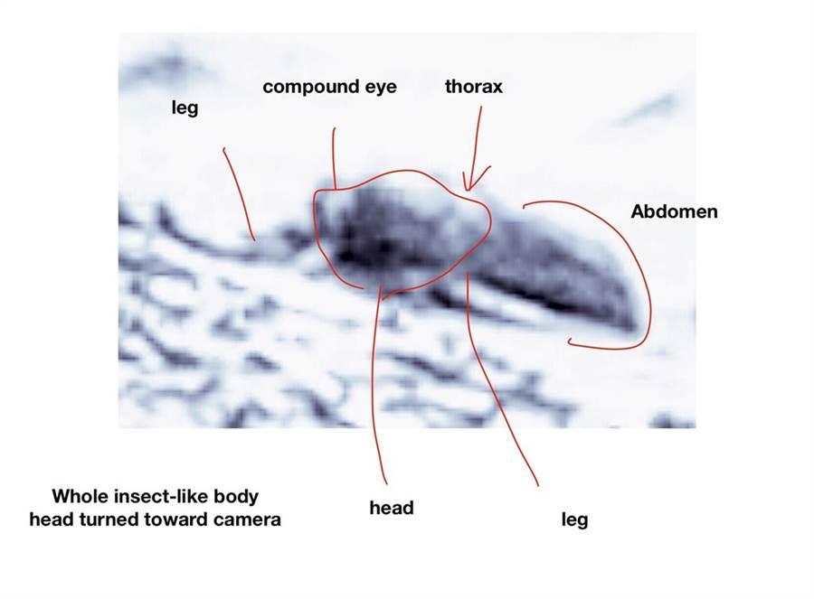 美國學者羅摩瑟宣稱從照片發現火星生命存在的跡象,稱看得出是類似爬蟲類和像是蜜蜂的昆蟲。(俄亥俄大學網頁)
