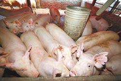 農委會收購大肥豬 每日1000頭