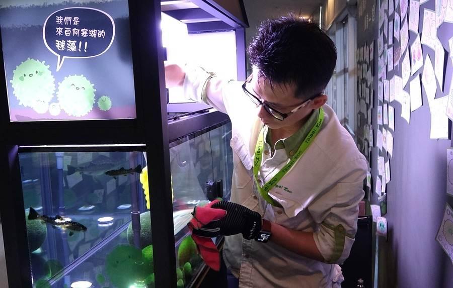 毬藻的日常照養,入門工作就是一週一次的藻缸環境清潔與基本檢查。(台北市立動物園提供)