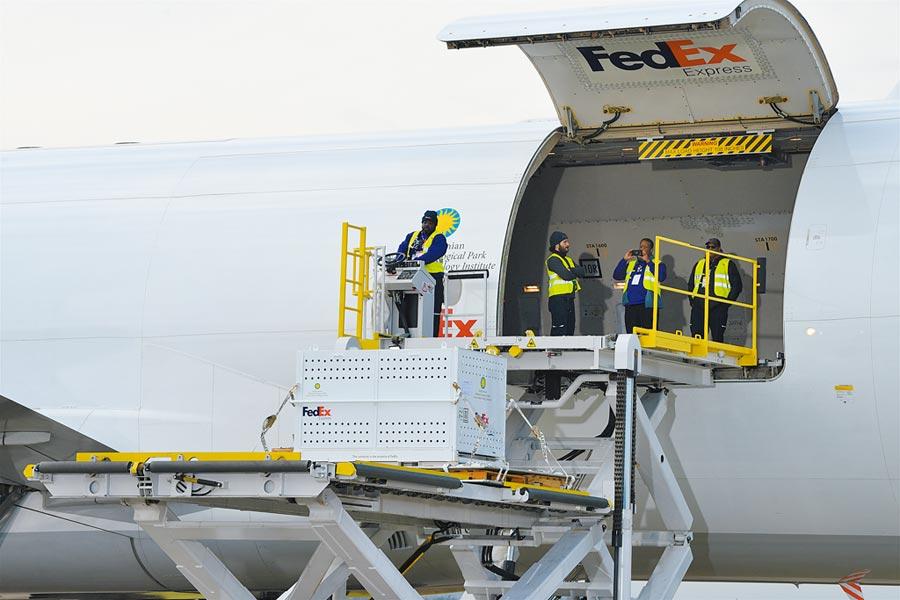 當地時間11月19日,「貝貝」從華盛頓搭乘專機直飛成都。(中新社)
