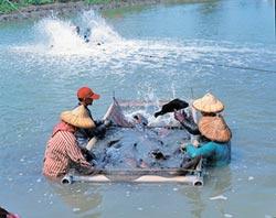 水產養殖 AI、物聯網將成發展關鍵
