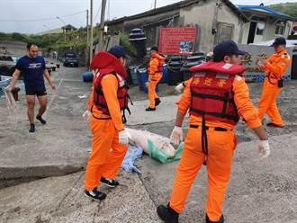 貢寮卯澳漁港驚見死亡鯨豚  竟是保育抹香鯨