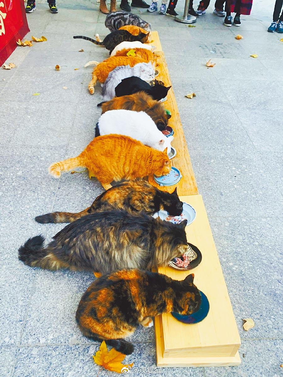 位於北京的觀復博物館養了十幾隻「觀復貓」,貓咪還有專門辦公室。(取自微博@觀復貓)