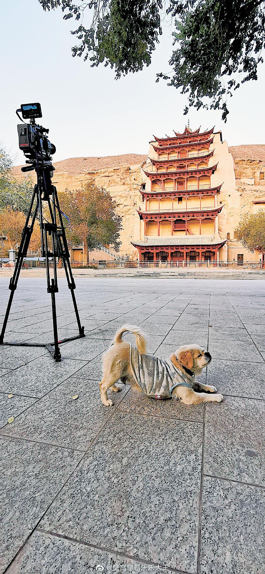 敦煌莫高窟的「樂樂大王」圈粉無數,吸引遊客拍照打卡。(取自微博@莫高窟霸樂樂大王)