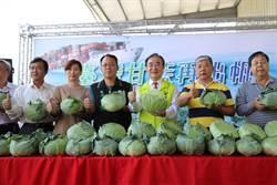 農糧署大秀高麗菜外銷越南政績 林佳新痛批作秀