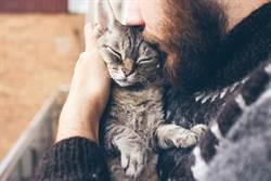 救回受傷小貓 5年後上演貓的報恩