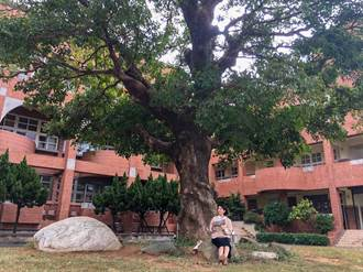 新竹市新增11棵老樹列管  林智堅邀大家跟著老樹去旅行