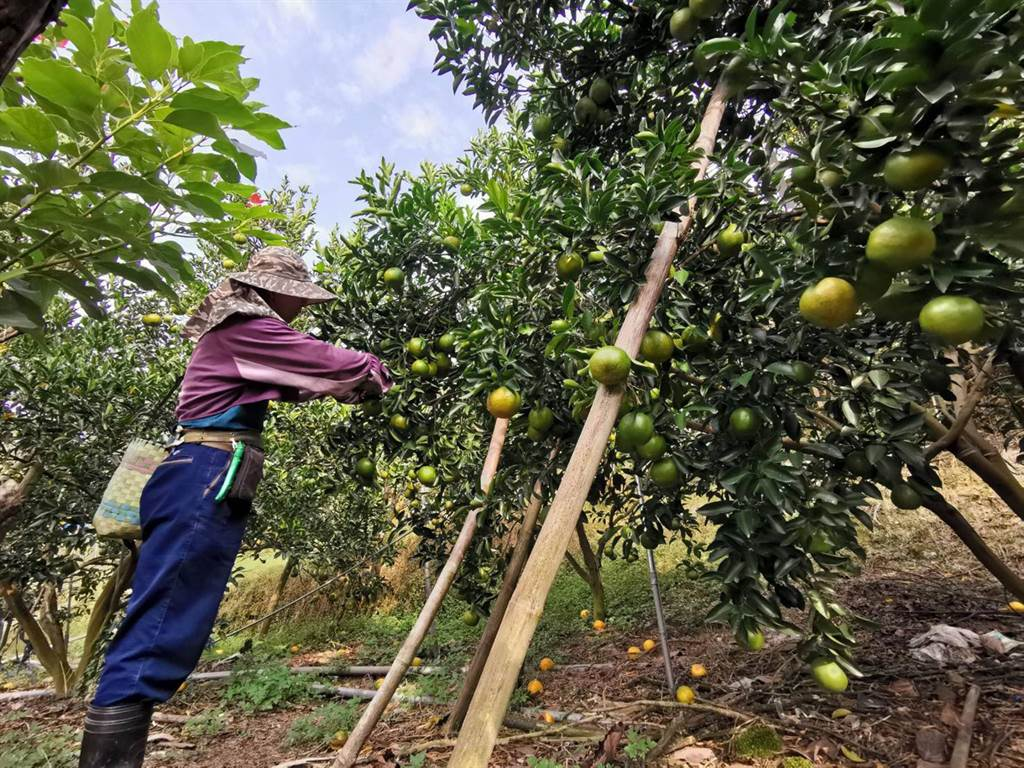 農民職業災害保險去年11月試辦,截至26日嘉縣投保率為25%。(張毓翎攝)