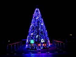 北市動物園夜間點燈!6米高耶誕樹秀繽紛、盼喚愛
