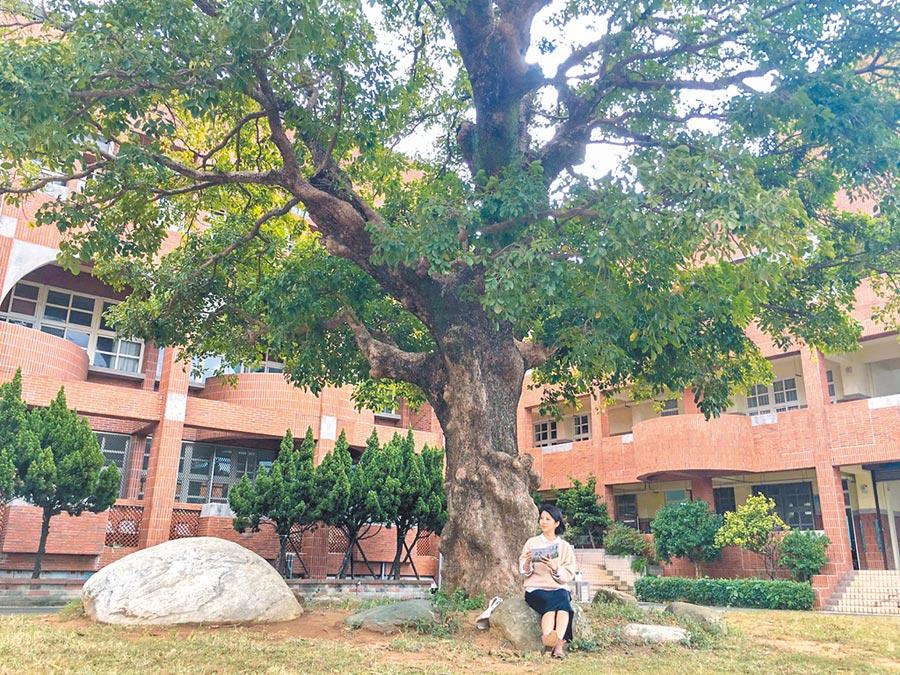 市府新增列管11棵老樹中的內湖國中百年茄苳。(羅浚濱攝)