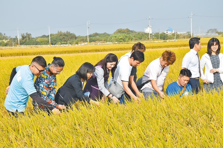 26日嘉義縣太保市農會特地安排日本北海道青農到產區了解有機米栽種情況。(呂妍庭攝)