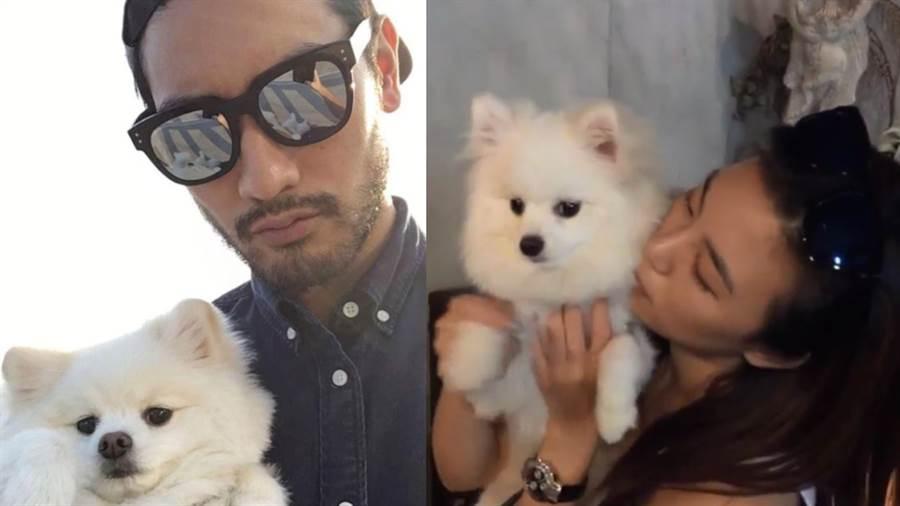 高以翔的愛狗「帝歐」,曾多次出現在Bella的IG版面上面。(圖/IG@bella_navy4life)