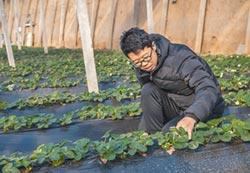 陸農業經理人 5年需150萬人