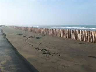 搶救海岸線  南市投入2.6億元復育沙洲