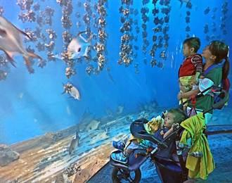 伊甸慢飛天使到屏東海生館 和魚兒近距離接觸