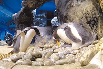 企鵝幼兒園 萌樣大公開