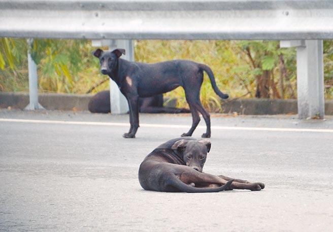 墨西哥一名男子遭6隻惡犬攻擊撕咬,傷重不治身亡。(非事發示意圖/本報資料照片)