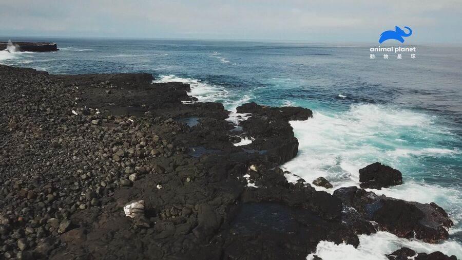 封印之島保留滅絕動物新希望。(動物星球頻道 提供)