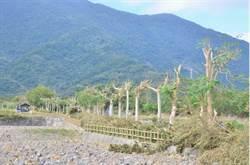 台人最愛 關山最美自行車道路樹全遭斷頭