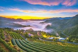 坪林推茶鄉一日遊體驗在地味