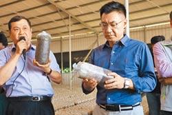 保護台灣菇農 進口期避開產季