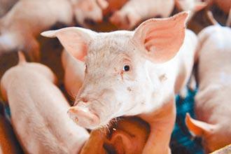 豬隻內臟別丟掉 做成藥膳好補身