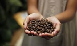 西雅圖咖啡摻低價豆 專家曝7差異
