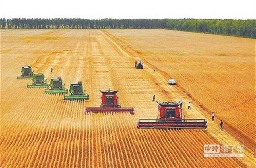 貿易戰將威脅大陸糧食供應。圖為黑龍江雙鴨山友誼農場,使用聯合收割機收穫大豆。(新華社資料照片)