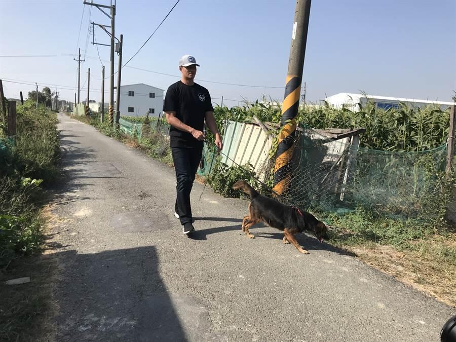 陳偉殷帶狗園收容的流浪狗散步。(鄧心瑜攝)