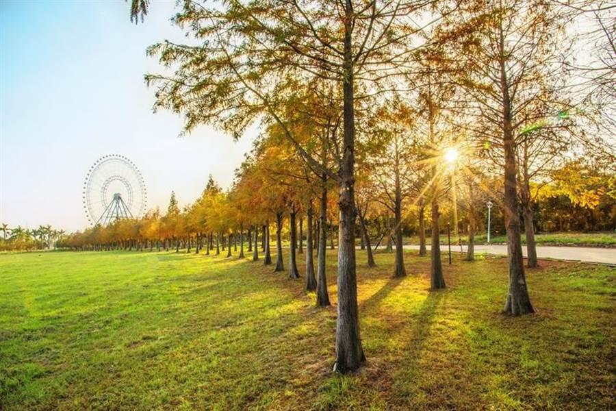 麗寶樂園渡假區今年首度推出「摩天輪落羽松秘境套票」搶客! (圖/麗寶樂園)