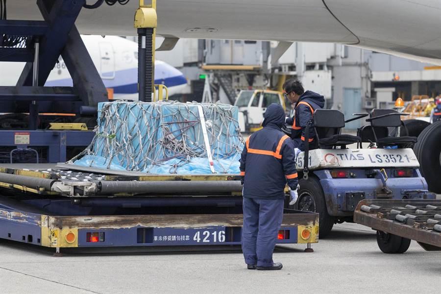高以翔的棺木卸載後,地勤人員準備以拖車拖往長榮空運倉儲機放倉。(陳麒全攝)